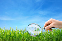 Closeup of grass under magnifying glass Stock Photography