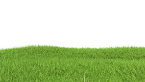 Closeup of grass on a white background Royalty Free Stock Images