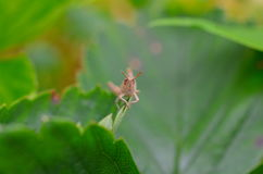 Closeup of a grasshopper sitting on plant Stock Image