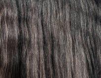 Closeup of gray horse long glitter mane. Royalty Free Stock Photos