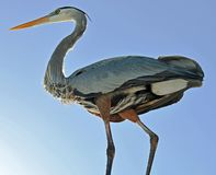 Closeup of a great blue heron`s underbelly sunlit from the lower left corner. stock photo