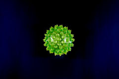 Closeup of Green Biological Virus with Copyspace Royalty Free Stock Photography