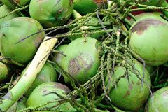 Closeup of green coconuts For Sell On Street. Closeup of fresh green coconuts For Selling On Public Street Stock Photo