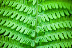 Closeup of green fern stem and leaves Stock Photo