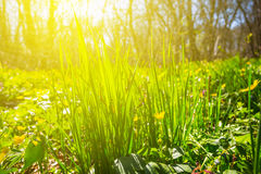 Closeup green forest glade Royalty Free Stock Photos