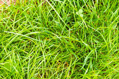 Closeup of green fresh grass Stock Photography