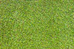 Closeup of the green grass Royalty Free Stock Photo