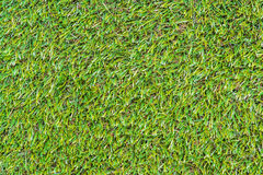 Closeup of the green grass Stock Image