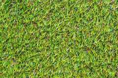 Closeup of the green grass Royalty Free Stock Photography