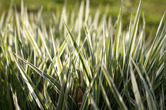 Closeup of green grass bush Royalty Free Stock Photography