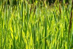 Closeup of Green Grass Stock Photo