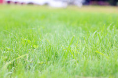Closeup of green grass with shallow depth of field Royalty Free Stock Photo