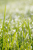 Closeup of green grass with soft bokeh background Royalty Free Stock Images