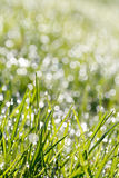 Closeup of green grass with soft bokeh background Royalty Free Stock Photo