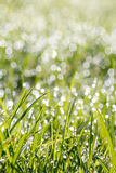 Closeup of green grass with soft bokeh background Royalty Free Stock Photos