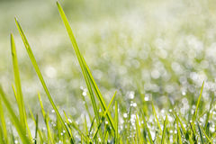 Closeup of green grass with soft bokeh background Stock Photo