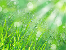 Closeup of green grass on a sunny day with green abstract bokeh background Royalty Free Stock Photo