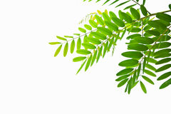 Closeup green leaf Stock Images