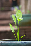 Closeup green leaf Stock Photo