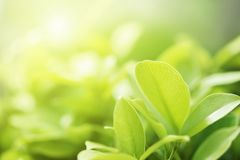 closeup green leaf on blur background Stock Photos