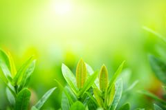 Closeup green leaf on blurred background under sunlight stock photography