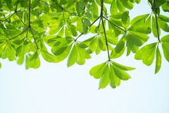 Closeup green leaf Stock Image