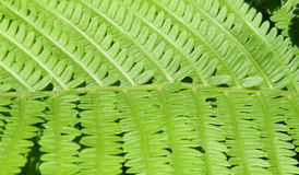 Closeup of green leaf of a fern plant Stock Image
