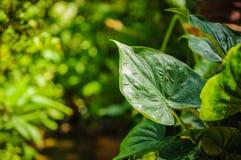 Closeup of green leaf Stock Photo