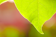 Closeup of green leaf part Royalty Free Stock Photo