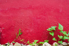 Closeup green leaf on the red cement wall Stock Photography