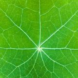 Natural background. Closeup of green leaf. Shallow depth of field Royalty Free Stock Photography