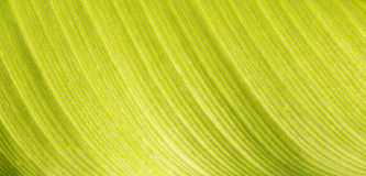 Closeup of a green leaf structure Stock Photos