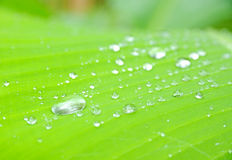 Closeup of green leaf water drops Royalty Free Stock Photo