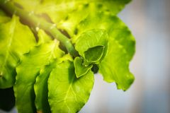 Closeup green leave. Selective focus at top leaves royalty free stock photos