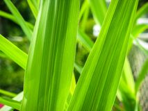Closeup of Green Leaves Stock Images