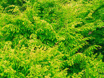 Closeup of green leaves tree outdoor. Nature background. Stock Images