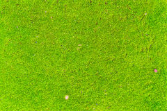 Closeup green moss floor for background use Stock Photography