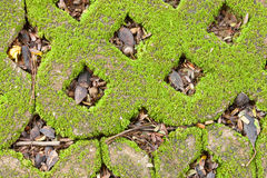 Closeup on Green Moss. Stock Image