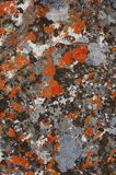 Closeup of green and orange lichens on rock texture in morro do bimbe, Angola stock photography