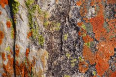 Closeup of green and orange lichens on rock texture in morro do bimbe, Angola royalty free stock photo