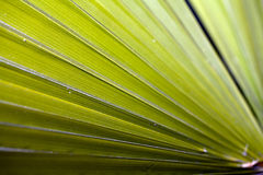 Closeup of green palm frond Stock Images