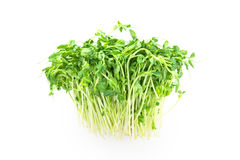 Closeup green pea sprout  on white background Stock Images