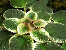 Closeup green plant 03 Royalty Free Stock Image