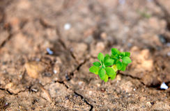 Closeup of green plant growing in dry desert soil Stock Images