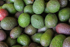 Closeup of green and red avocadoes Stock Images