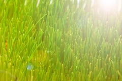 Closeup green spring grass Stock Image