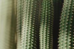 Closeup of green tropical plant. Cactus Royalty Free Stock Photos