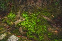 Green moss growing on tree stock photos
