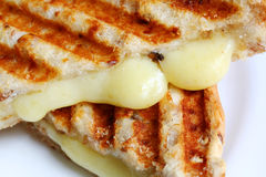 Closeup of Grilled Cheese Sandwich. Closeup of melting cheese in a grilled cheese sandwich on wholewheat bread. With grill marks royalty free stock photography
