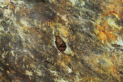Closeup of Gritty Rock Surface Stock Images